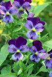 Fleurs d'été. Photos libres de droits