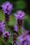 Fleurs d'été Images stock