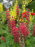 Fleurs d'été Photo stock