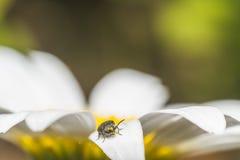 Fleurs d'été avec des insectes Photos libres de droits