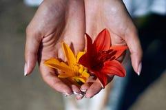 Fleurs d'été dans des ses mains photos stock