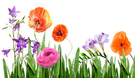 Fleurs d'été dans l'herbe illustration de vecteur