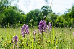 Fleurs d'été dans l'herbe verte Image stock