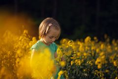 Fleurs d'été de cueillette d'enfant sur le champ jaune Enfants et nature images stock