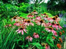 Fleurs d'été de jardin botanique Image stock