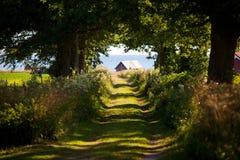 Fleurs d'été le long d'un petit road.GN Images stock