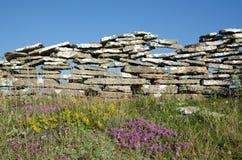 Fleurs d'été par un vieux mur en pierre Images stock