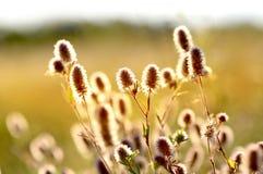 Fleurs d'été sur le pré Photographie stock libre de droits