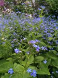 Fleurs d'île photo libre de droits