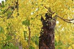 Fleurs d'or Photos libres de droits
