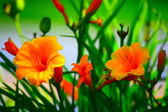 Fleurs d'or Images stock