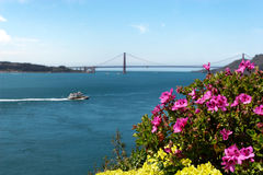 Fleurs d'Alcatraz photos stock