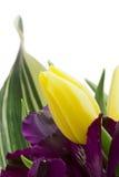 Fleurs d'Alstroemeria photo libre de droits