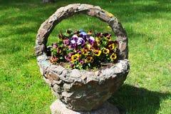 Fleurs d'alto dans le panier en pierre sur un parterre photos libres de droits