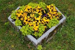 Fleurs d'alto dans le panier en pierre sur un parterre images libres de droits