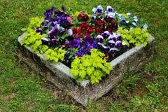 Fleurs d'alto dans le panier en pierre sur un parterre photo stock
