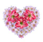 Fleurs d'Amaryllis images libres de droits