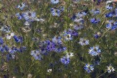 fleurs d'Amour-dans-un-brume Image stock