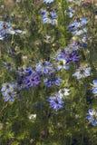 fleurs d'Amour-dans-un-brume Images libres de droits