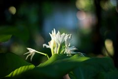 Fleurs d'amour de matin Images libres de droits