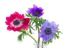 Fleurs d'anémone Photos stock
