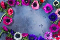 Fleurs d'anémones sur le fond en pierre photo stock