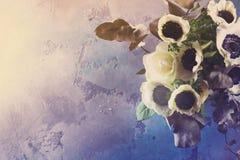 Fleurs d'anémones sur le fond en pierre images libres de droits