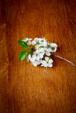 Fleurs d'Apple sur le fond en bois Photo libre de droits