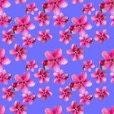 Fleurs d'Apple Texture sans couture de modèle des fleurs Backg floral Photo libre de droits