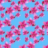 Fleurs d'Apple Texture sans couture de modèle des fleurs Backg floral Photos stock