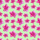Fleurs d'Apple Texture sans couture de modèle des fleurs Backg floral Photo stock