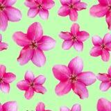 Fleurs d'Apple Texture sans couture de modèle des fleurs Backg floral Images stock
