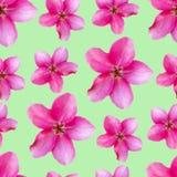 Fleurs d'Apple Texture sans couture de modèle des fleurs floral Photo stock