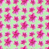 Fleurs d'Apple Texture sans couture de modèle des fleurs floral Image stock