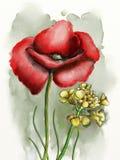Fleurs d'aquarelle Images stock