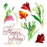 Fleurs d'aquarelle Image libre de droits