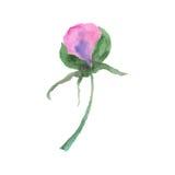 Fleurs d'aquarelle Images libres de droits