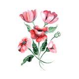 Fleurs d'aquarelle - pavots rouges avec des feuilles, Photographie stock libre de droits