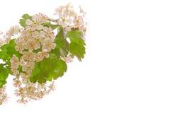 Fleurs d'arbre Images stock