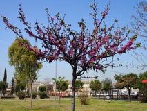 Fleurs d'arbre Photographie stock libre de droits