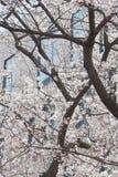 Fleurs d'arbre en fleur pendant le ressort images libres de droits