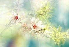 Fleurs d'arbre fleurissant pendant le ressort photo stock