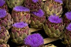 Fleurs d'artichaut Photo libre de droits