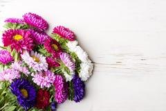 Fleurs d'aster Image stock