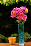 Fleurs d'aster Photographie stock