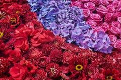 Fleurs d'aster, roses et d'hortensia Le beau rose fleurit le backgr Photographie stock libre de droits
