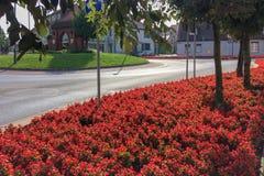 Fleurs d'automne photos stock
