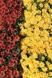 Fleurs d'automne Image stock