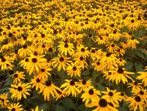 Fleurs d'automne dans la station thermale de Leamington Photographie stock libre de droits