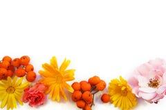 Fleurs d'automne et baies de sorbe sur le fond blanc Photographie stock libre de droits